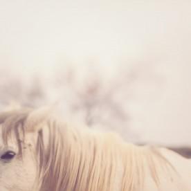 wild horses-texas